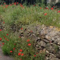 House for sale in France - poppies.jpg